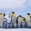 illustrazione 365 pinguini, ecologia spiegata ai bambini